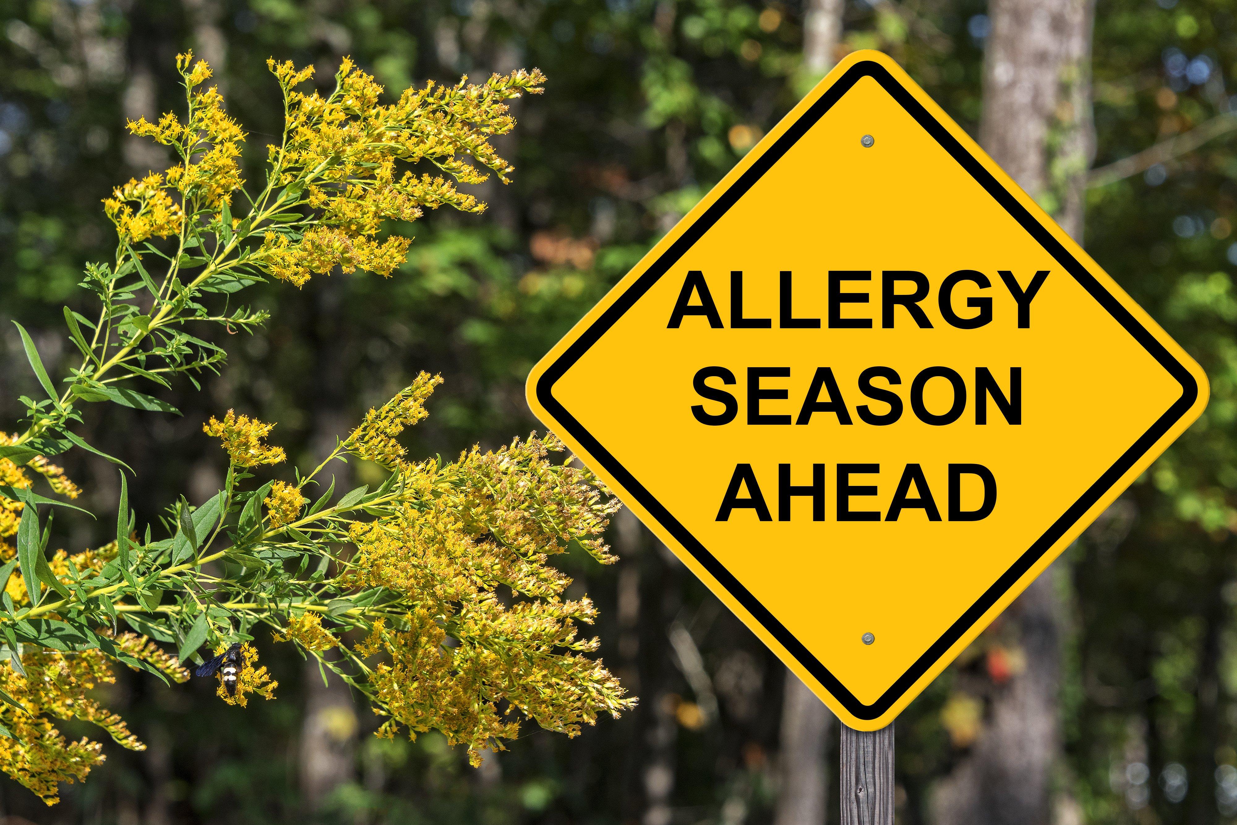 4 Fall Allergy Essentials